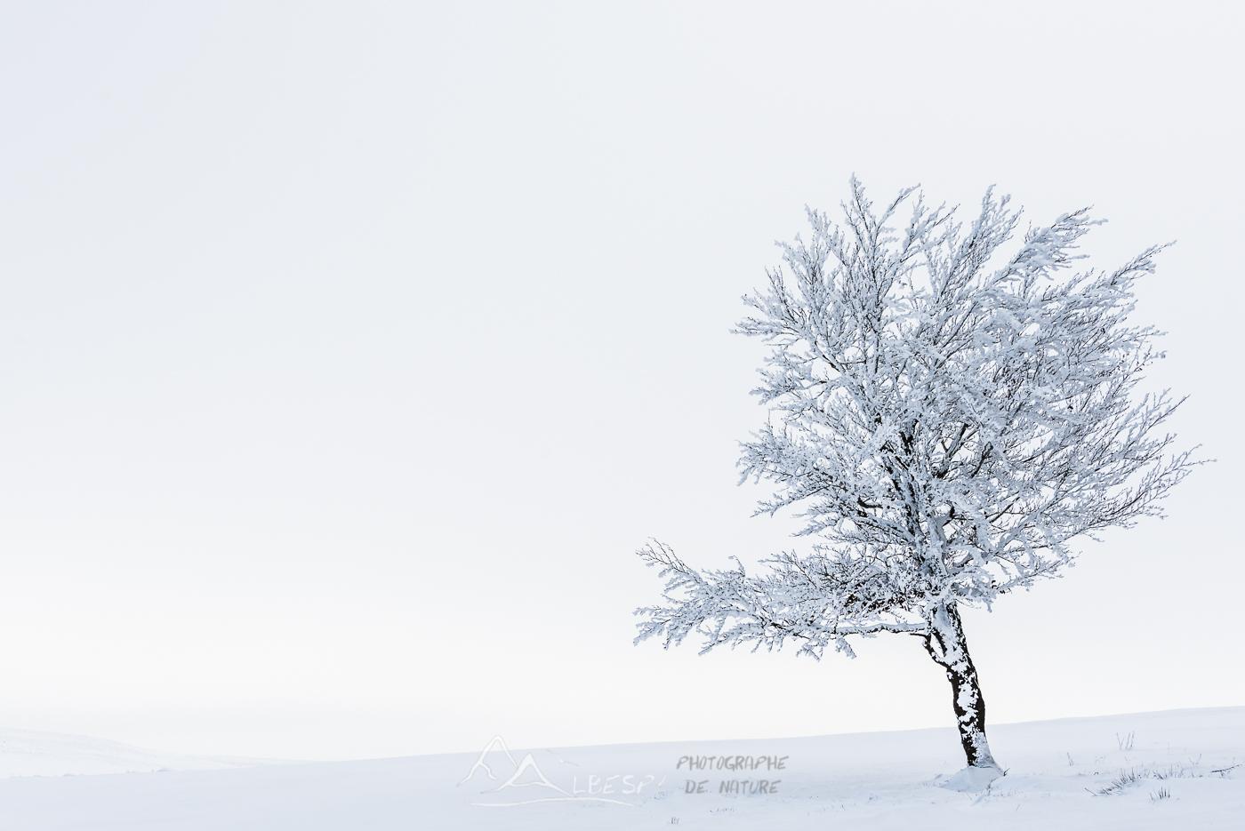 Seul dans le froid (Plateau de l'Aubrac) n°0215