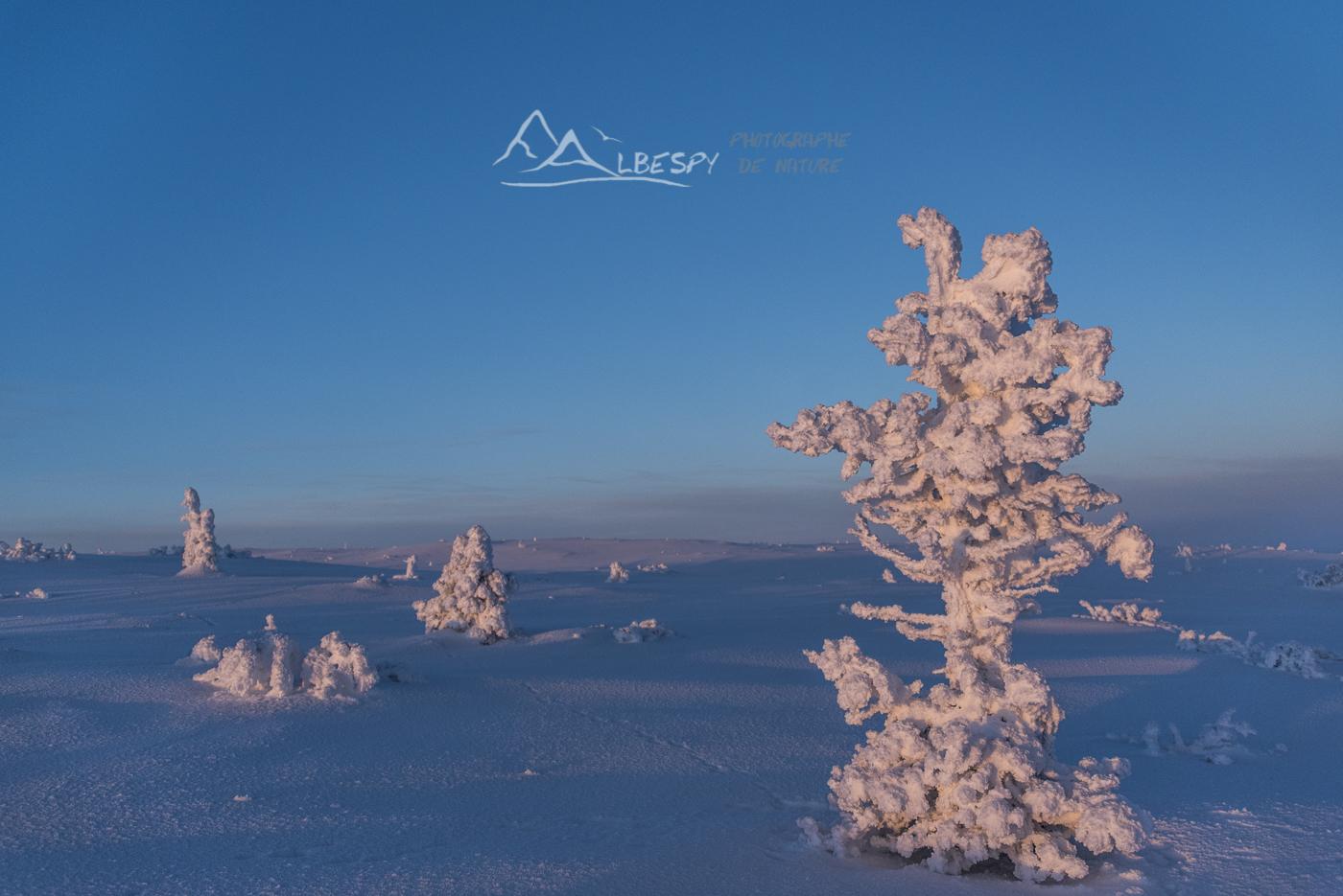 Figé pour l'hiver (Suède) n°1019
