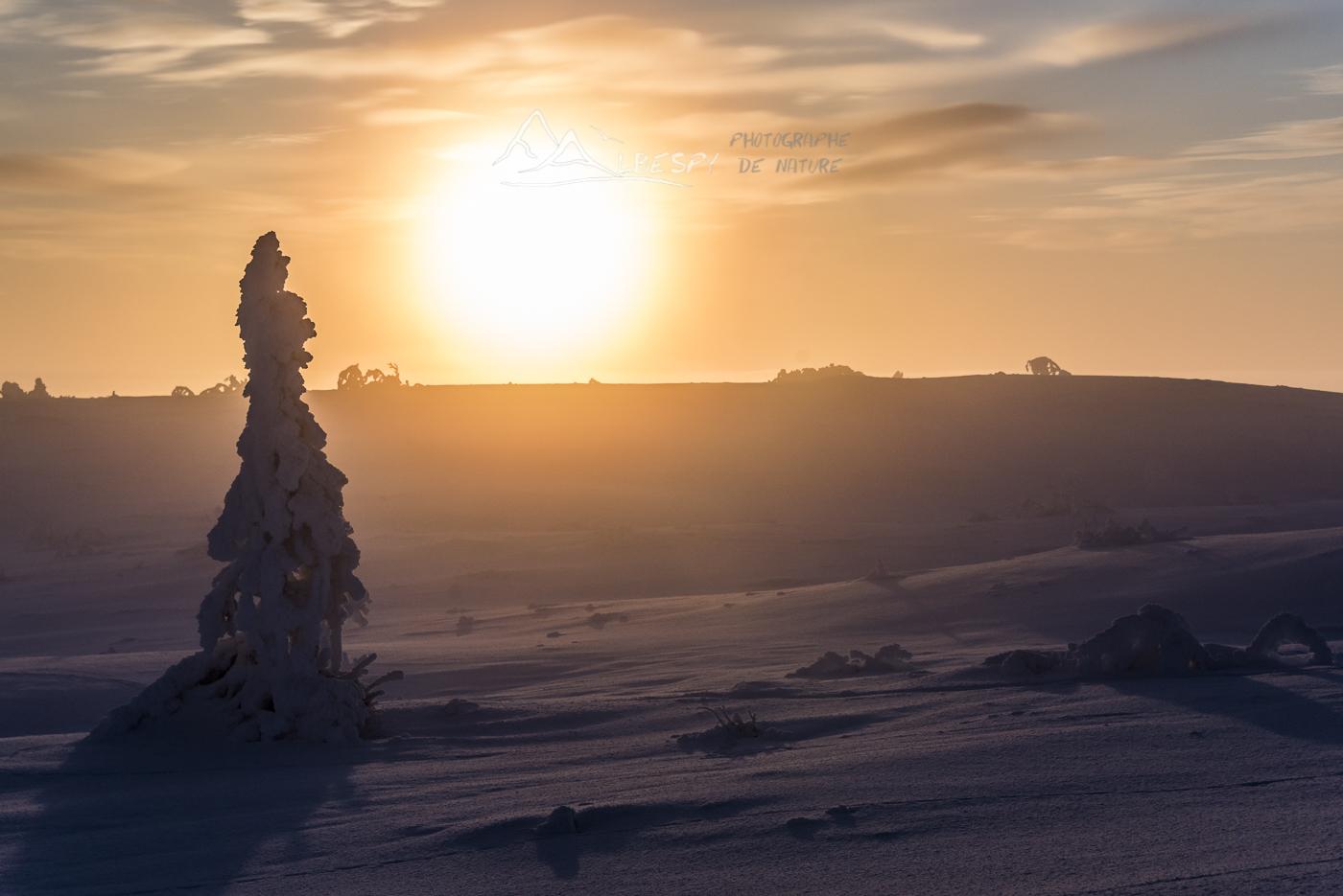 Le paradis par -30°C (Suède) n°1017