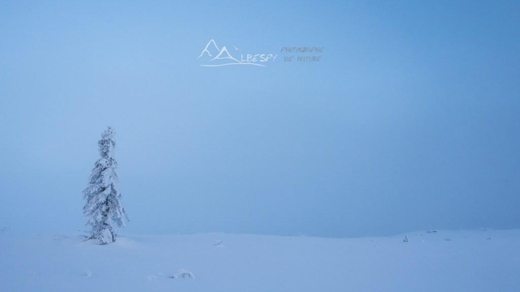 Seul dans le froid (Suède) n°1013