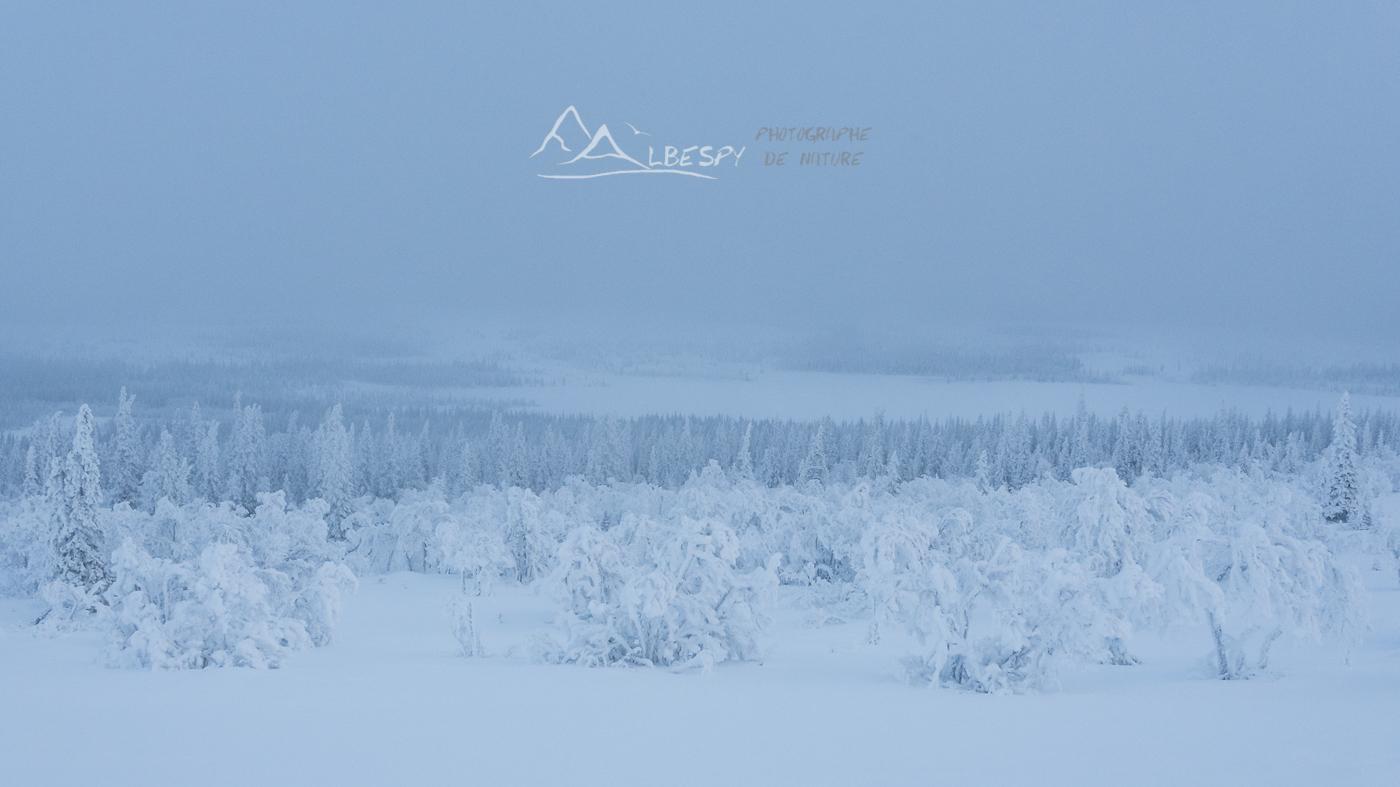 Blanc comme neige (Suède) n°1012