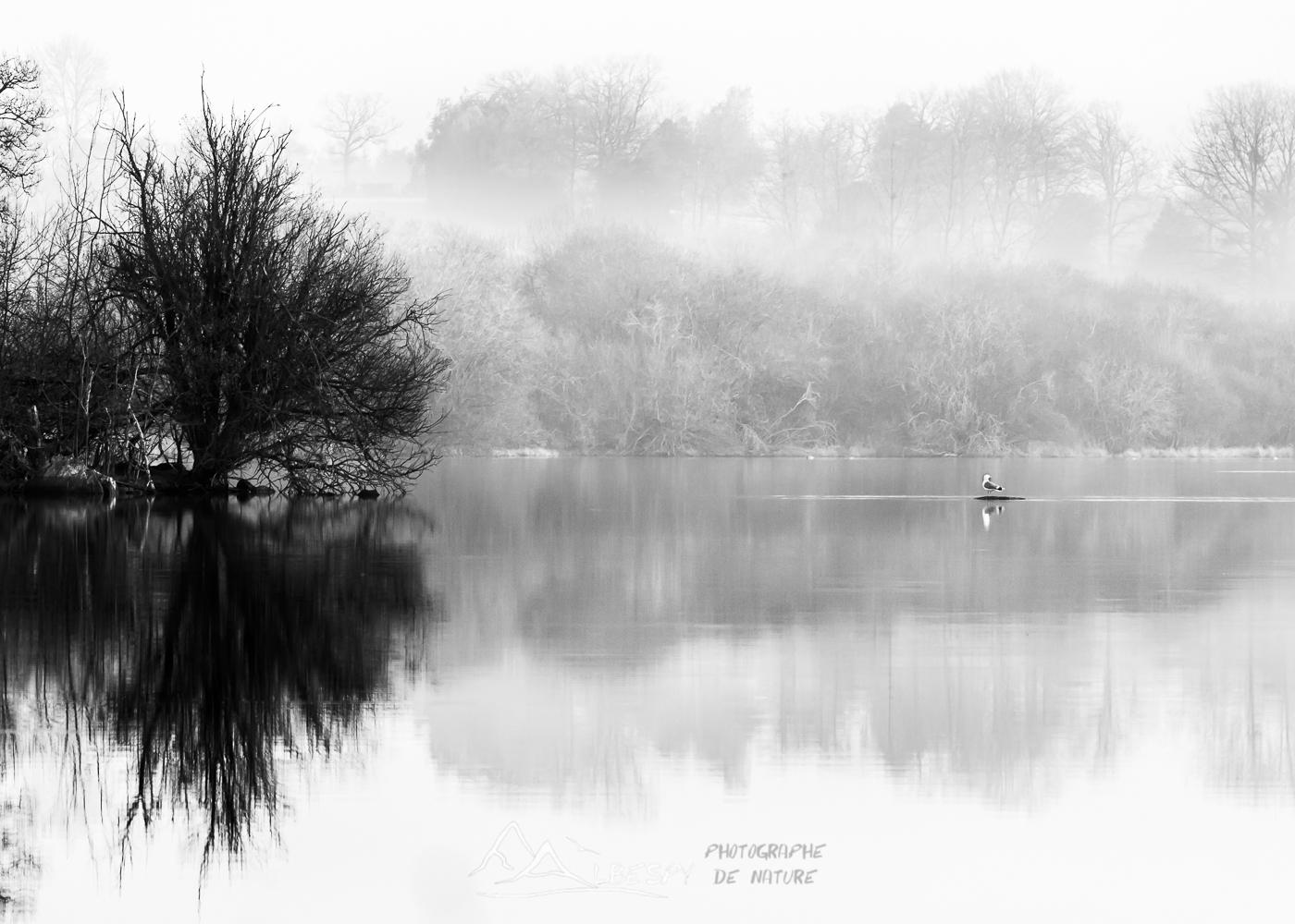 Solitude (Lac de la Gourde) n°0209