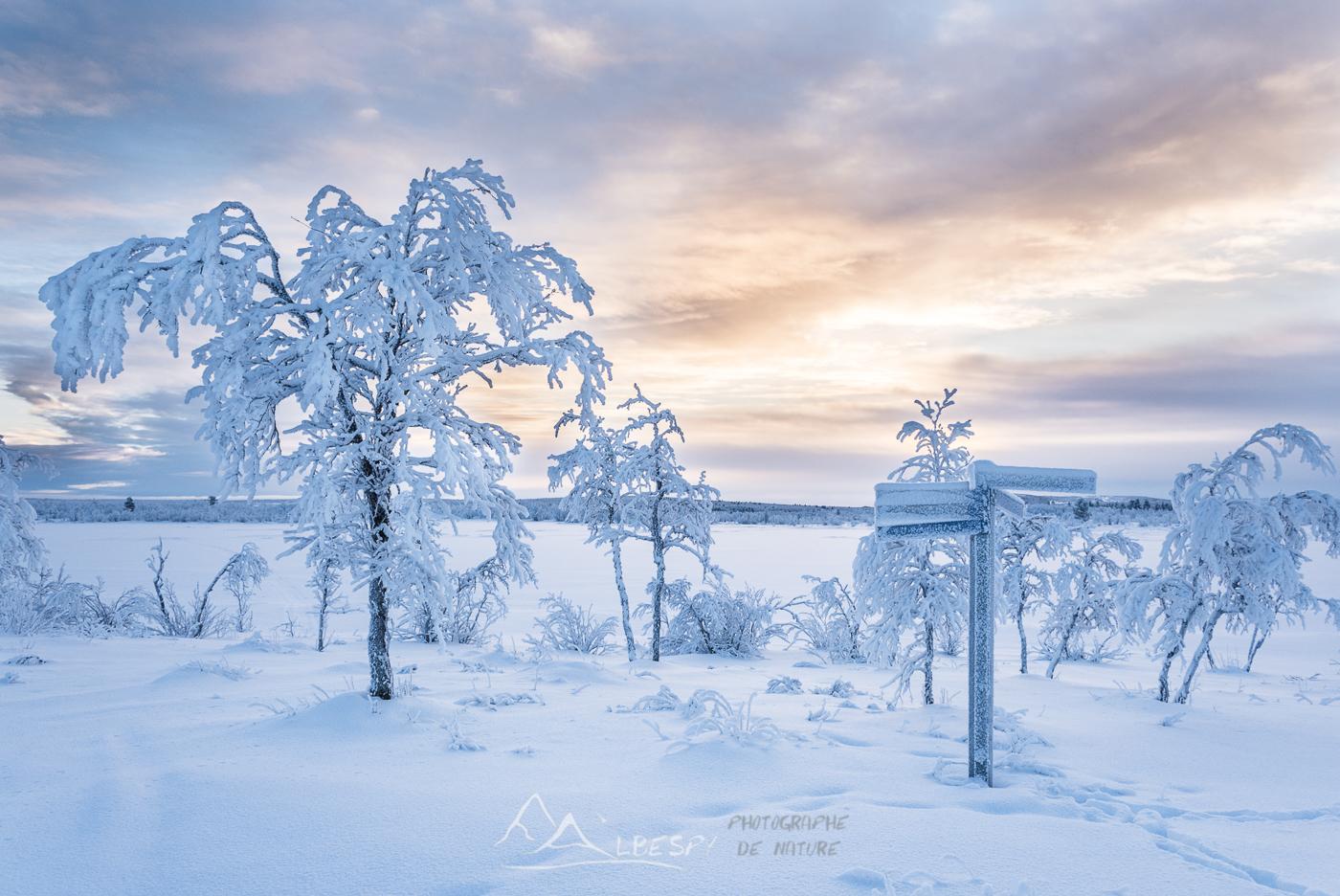 Paradis blanc (Suède) n°1007