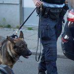 Politi, Hund