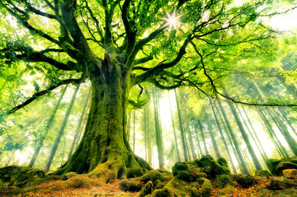 il rencontre une colonne de puissance en pleine forêt site de rencontre jeune serieux gratuit