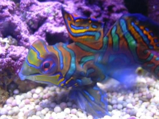 medium_aquarium_482.jpg