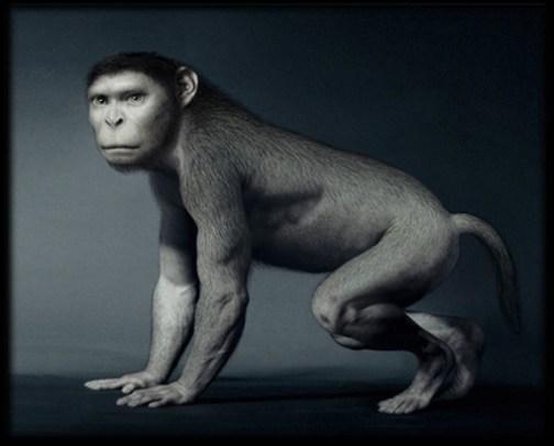 evolution-singe.jpg