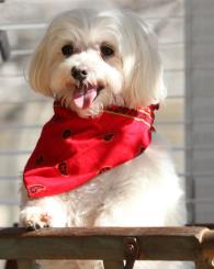 Fred Ferris Photography, Specializing in Family and Pet Photography