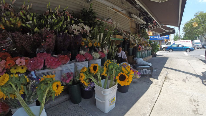 Deli Flowers, 2014, photo by Fred Hatt