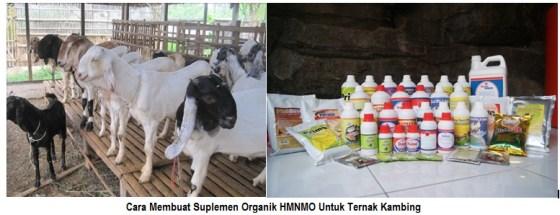 Cara Membuat Suplemen Organik HMNMO Untuk Ternak Kambing