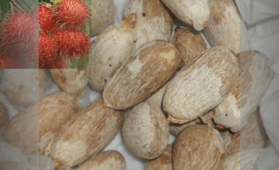 kandungan dan senyawa biji rambutan untuk kesehatan