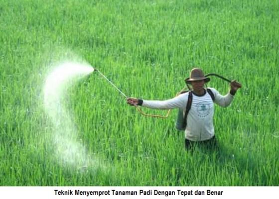 teknik menyemprot tanaman padi dengan tepat dan benar