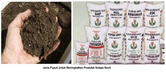 jenis pupuk untuk meningkatkan kelapa sawit