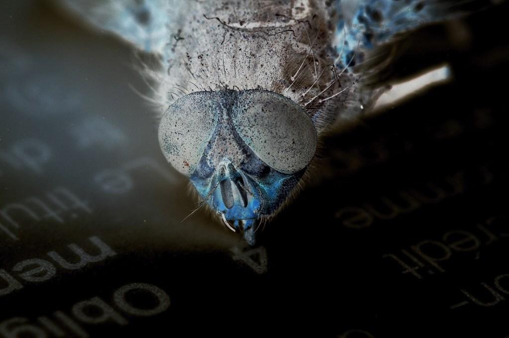 Tête de mouche