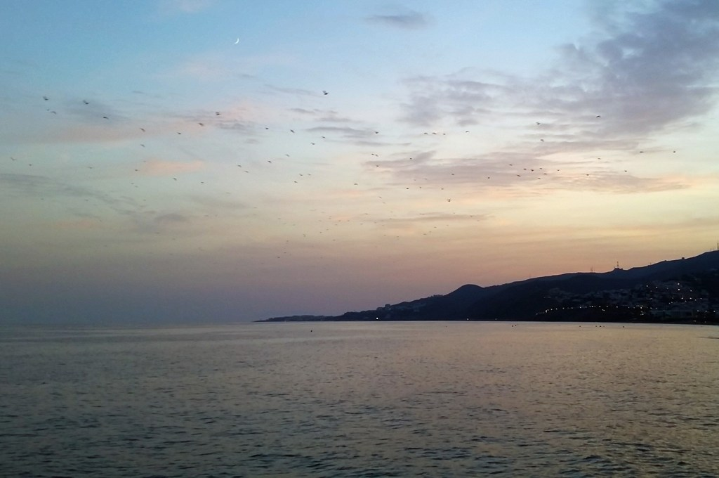 Birds over Nerja