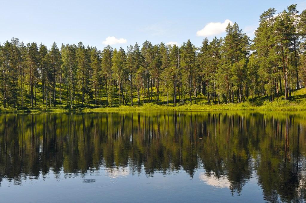 Forrest in Sweden