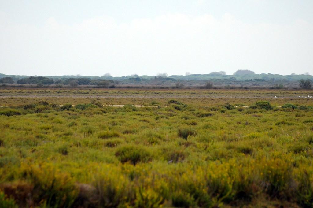 camargue paysage