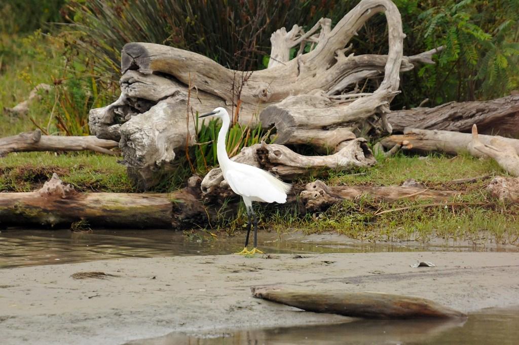 The white bird with yellow feet