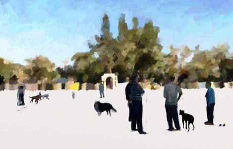 day 546 eagle dog park