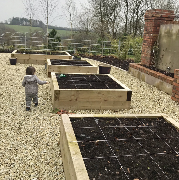 Easy vegetables to grow with children. The best seeds for toddlers to plant