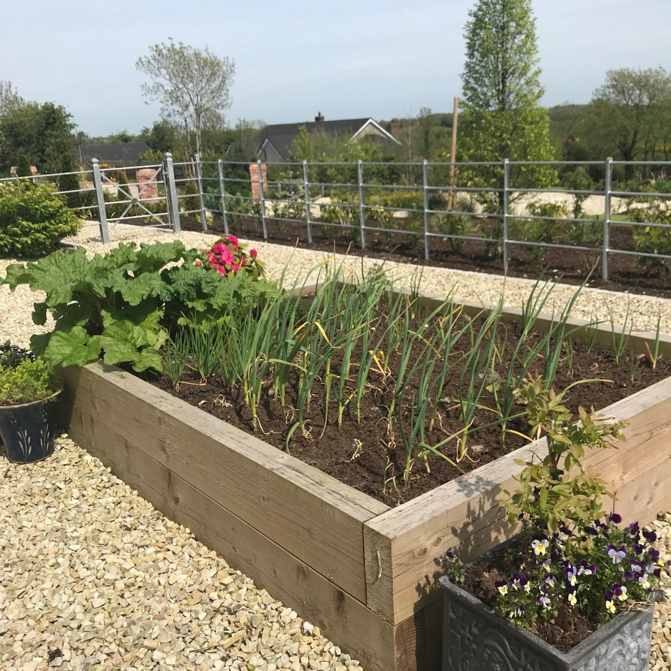 Kitchen Garden - Growing Onions in a Raised Bed