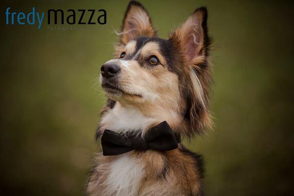 Fotografo mascotas murcia molina segura