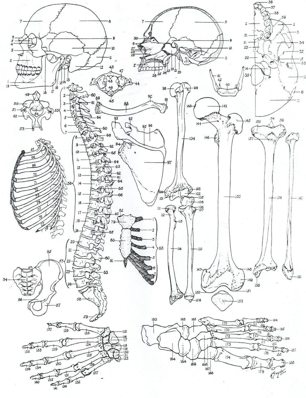 Brain Anatomy Worksheet Human Brain Worksheet Coloring