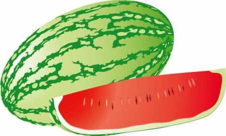 watermelon-8_vectormadness-450x272