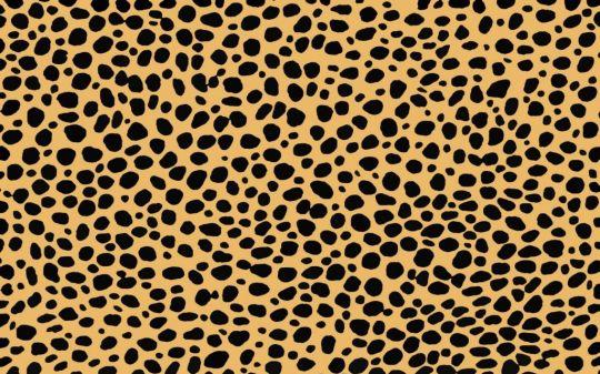 Cheetah03-540x337