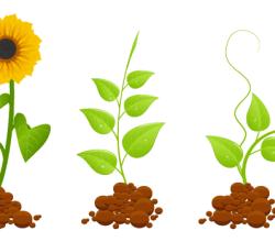 Eco Germinal Plants Free Vector