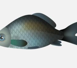 Vector Fish – Carp Free Image