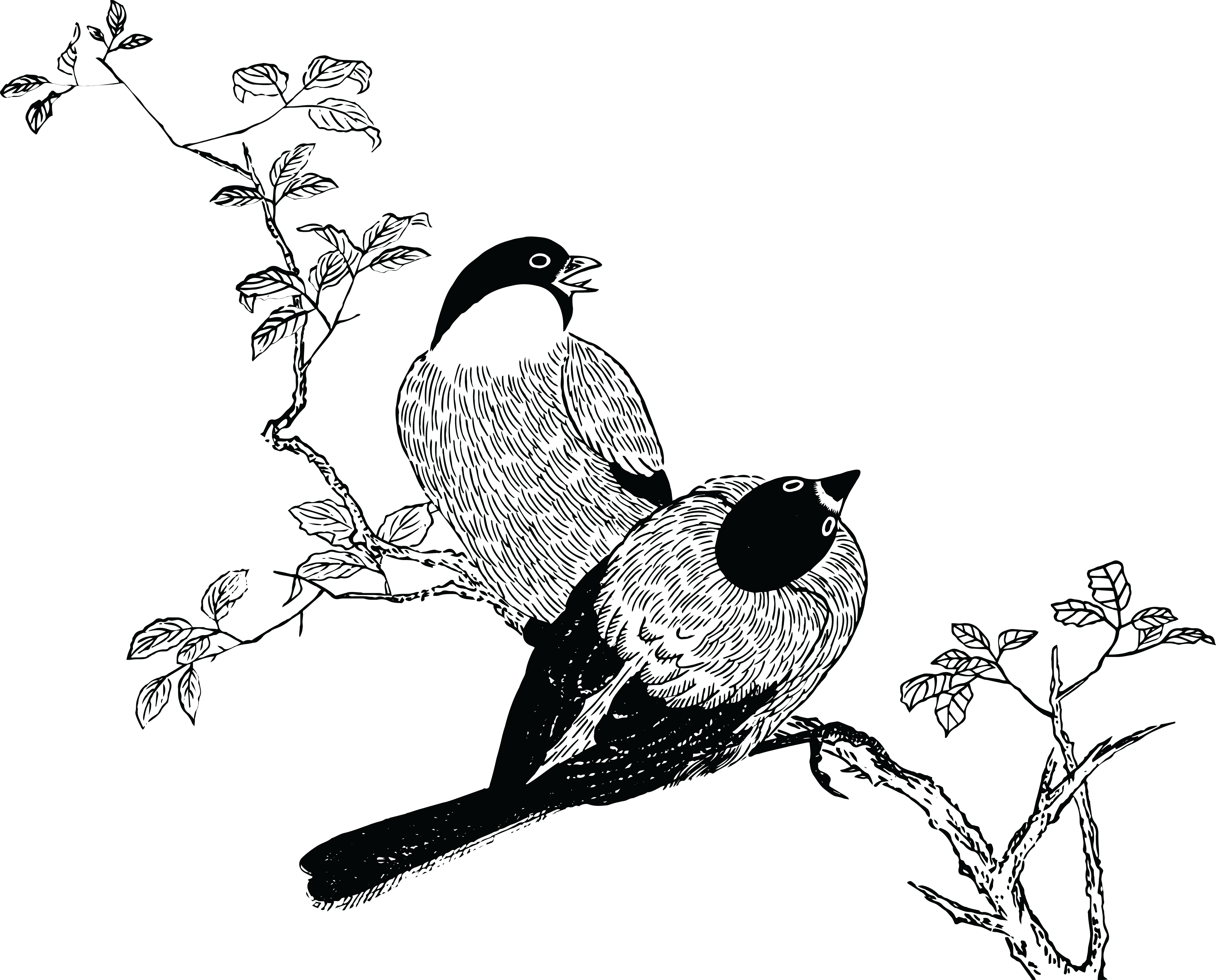 Free Clipart Of A Pair Of Birds