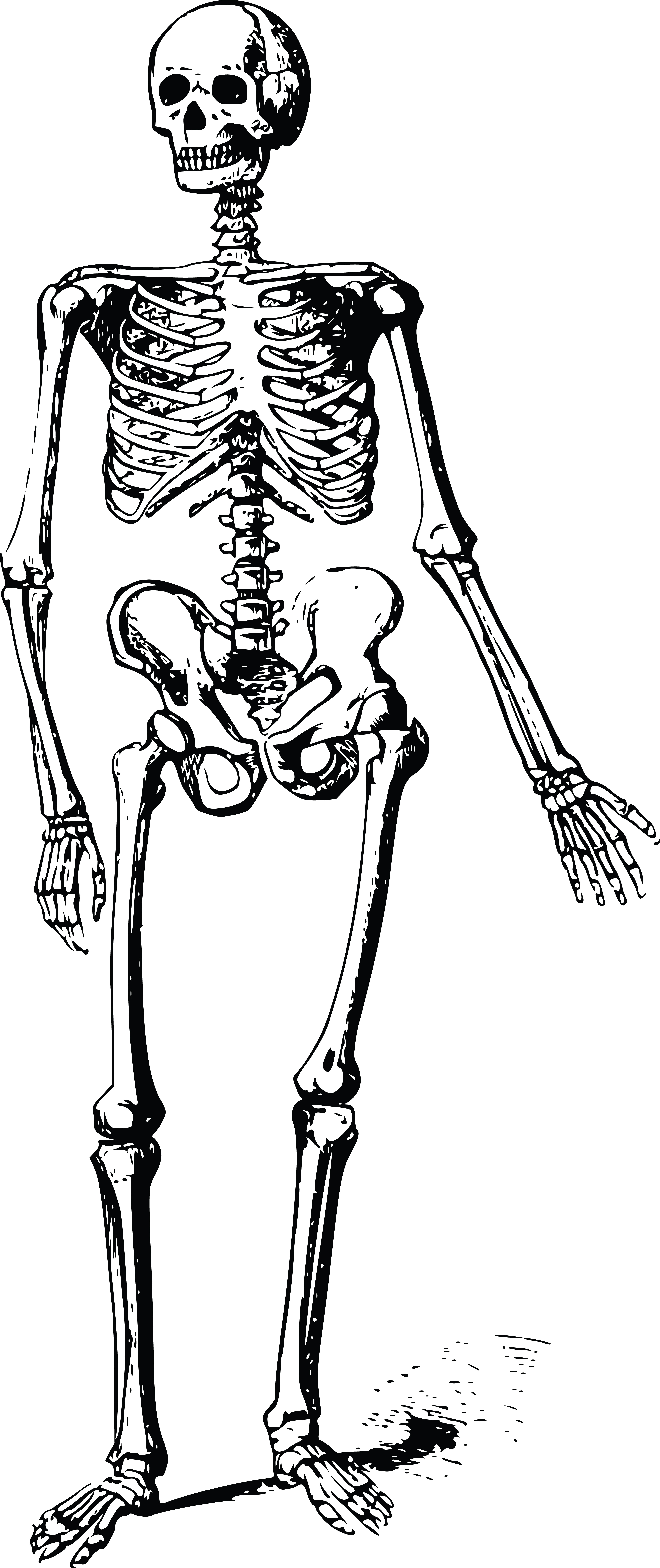 Free Clipart Of A Skeleton