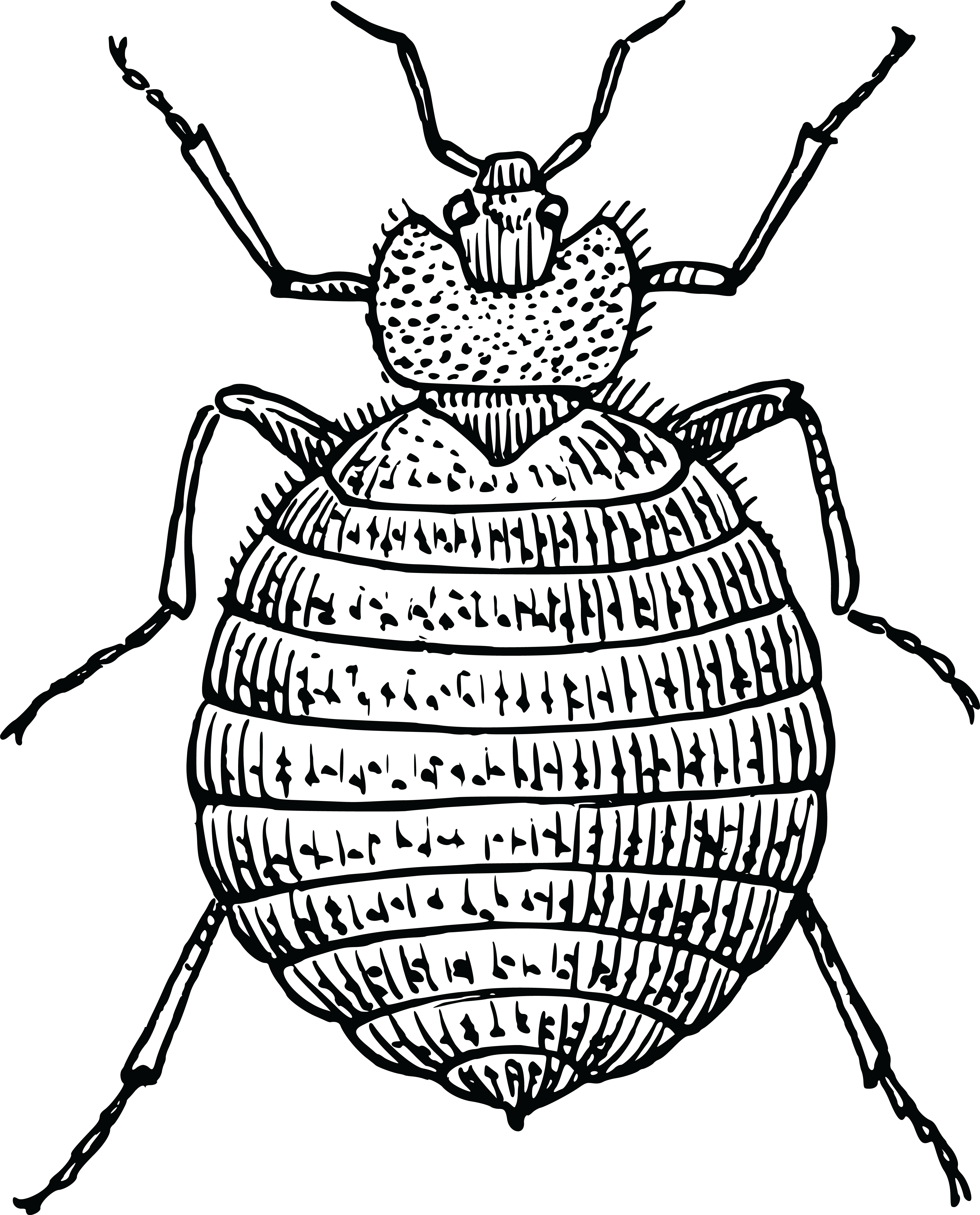 Free Clipart Of A Bedbug