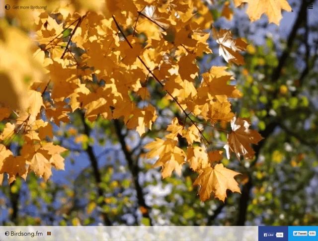 Birdsong.fm 利用蟲鳴鳥叫的聲音幫你專心或放鬆