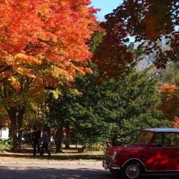 札幌 北大の紅葉