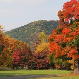 札幌 真駒内公園 藻岩山 紅葉