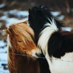 Black Brown Horses Snow White 4k Wallpaper