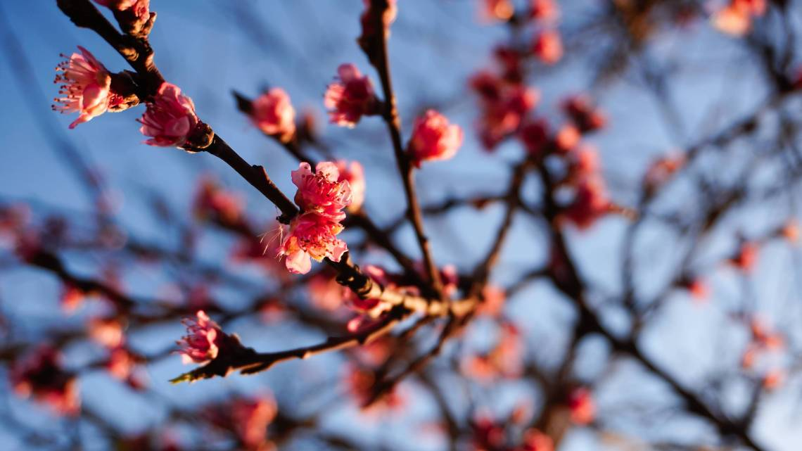 Cherry 4k Wallpapers For Your Desktop Or Mobile Screen Free And Easy To Download