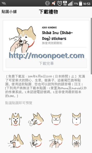 shiba_inu_1