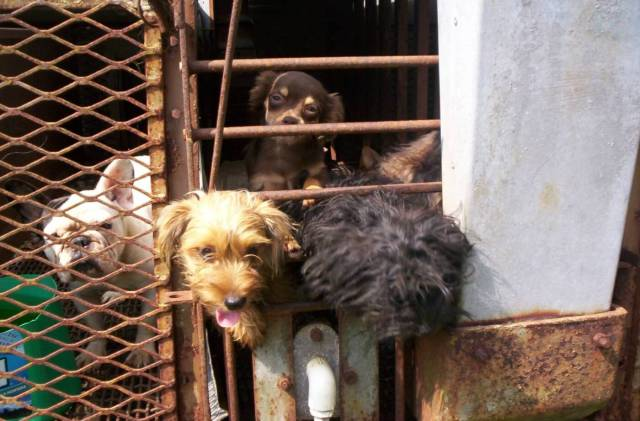 What are Puppy Mills? Get the Low-Down on Where You Might be Getting Your Pet