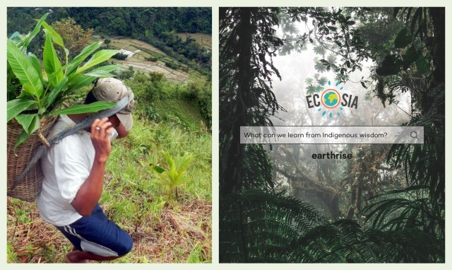 Ecosia is Now Planting Abaca and Other Native Trees in the Philippines