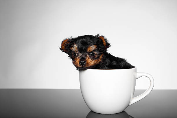 On Teacup Pets: What's Cute Isn't Always Right