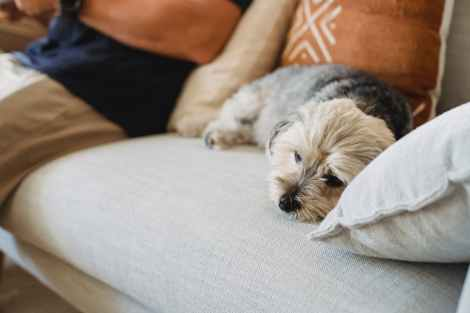4 Tips to Calm Your Dog During a Thunderstorm