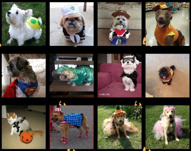 Pet Costumes for Halloween