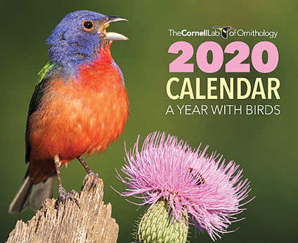 Free 2020 Cornell Lab Ornithology Calendar (US Only)