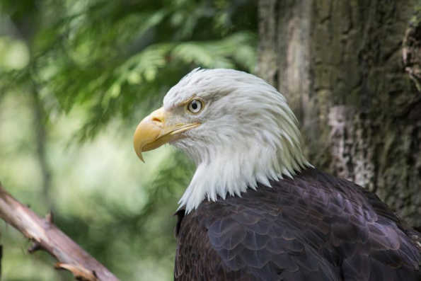 Free Entry to the Oregon Zoo to Support Employees Affected by the Government Shut Down