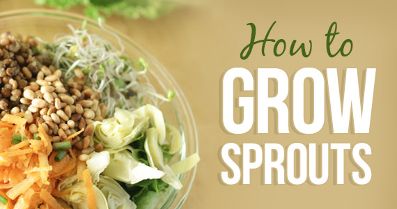 How To Grow Sprouts In Your Kitchen