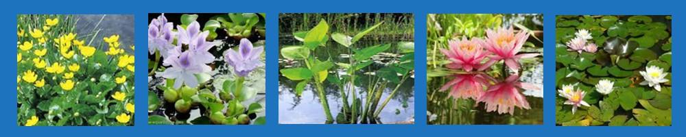 BANDEAU PLANTES