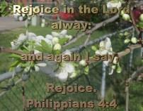 BIBLE VERSED (11)